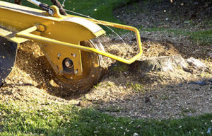 Fundamentals of tree removal activities explained in brief
