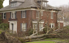 Why, When and How to hire tree service company