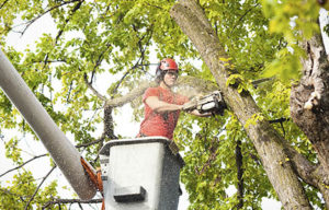 Tree Services. The Best in Town