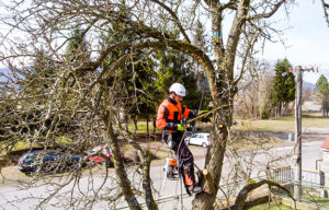 What A Tree Removal Service Will Include